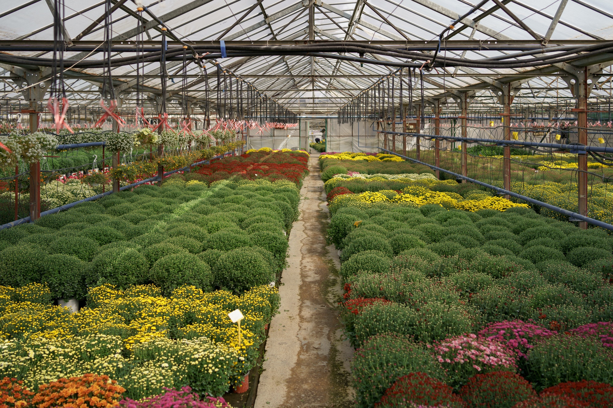 Plant greenhouse flowers nursery